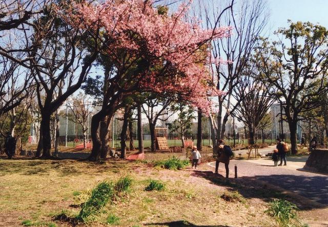 公園内の遊歩道